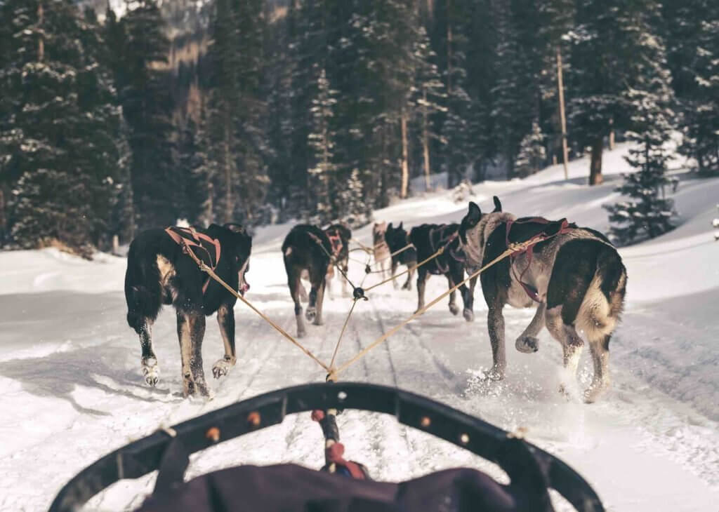 View from the catbird seat at the Monarch Dog Sled Rides • Photo courtesy of Monarch Dog Sled Rides